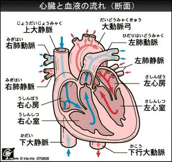 heart_bloodflow.jpg